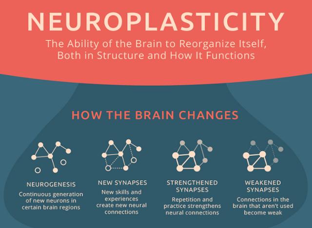 neuroplasticty